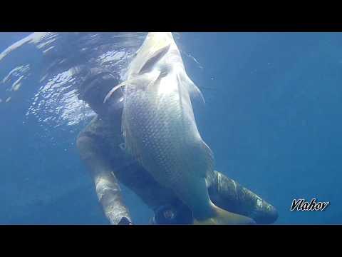 Spearfishing Croatia, Oleg Vlahov, 2019/1