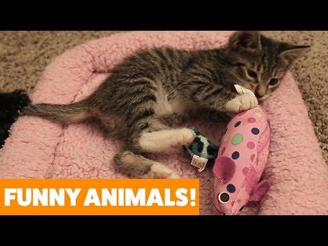 Littlest Pet Shop Pets + LPS Surprise Blind Bag On Hello Kitty Airplane - Cookieswirlc - Thời lượng: 5 phút và 25 giây.
