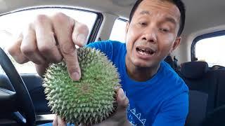 Download Video Tips & Latihan Memilih Durian Enak yg Perlu Dipelajari. MP3 3GP MP4