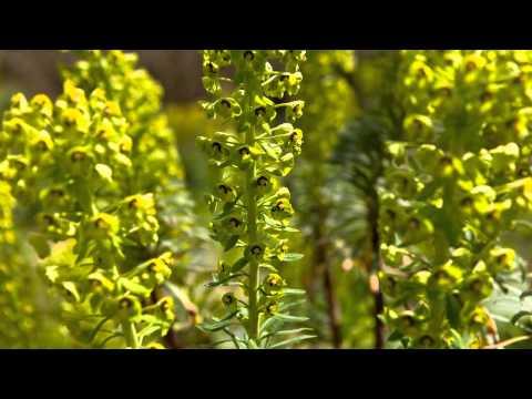 Garden Visit  Saville Gardens, Egham, Surrey