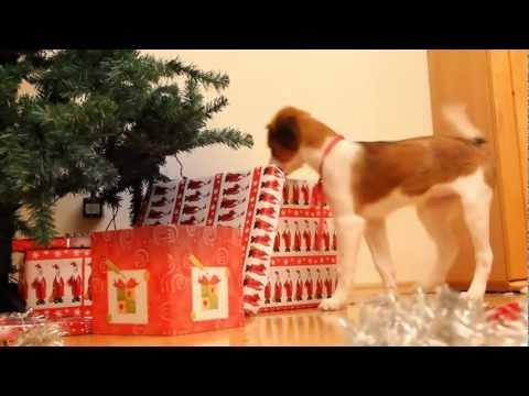 warum man tiere nicht zu weihnachten verschenken sollte. Black Bedroom Furniture Sets. Home Design Ideas