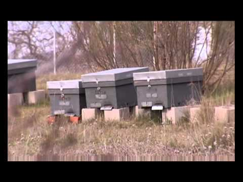 Salvando a las abejas