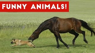 Funniest Pet & Animal Clips, Bloopers & Moments Caught On Tape...