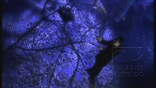 Video Rezza - Biar Menjadi Kenangan | Official Video MP3, 3GP, MP4, WEBM, AVI, FLV Maret 2018