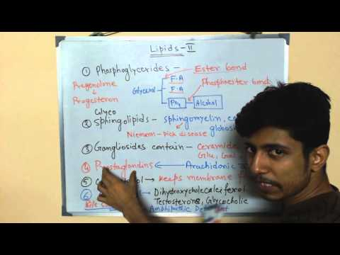 Lipids biochemistry | structure and function