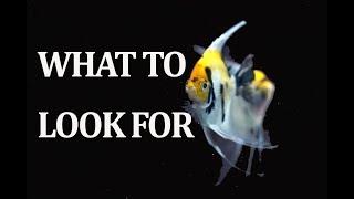 Choosing Healthy Aquarium Fish by Rachel O'Leary