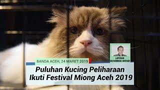 Puluhan Kucing Peliharaan Ikuti Festival Miong Aceh 2019 di Banda Aceh