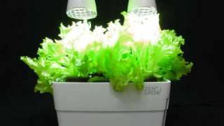 ZENGROW™ tabletop garden - time lapse 25 days