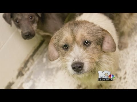 Roanoke shelter rescues nearly 40 abused dogs from West Virginia
