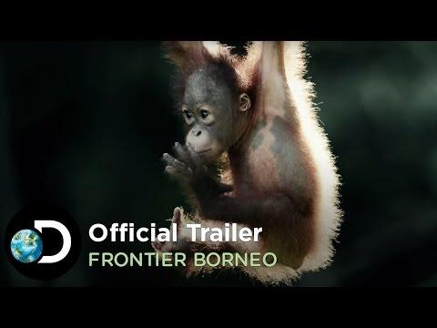Official Trailer   Frontier Borneo