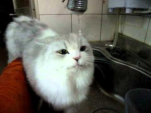 貓咪喝水 超可愛的啦