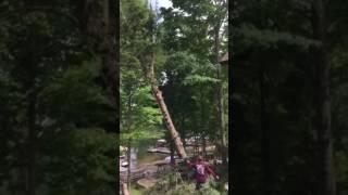 Roping A Tree Down In Peshtigo (Watch)