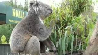 Burnie Australia  City new picture : Australia Burnie Wildlife Park and Countryside