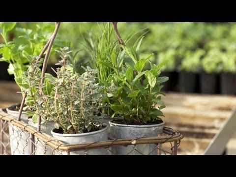 How to Arrange Herbs in Containers | At Home With P. Allen Smith
