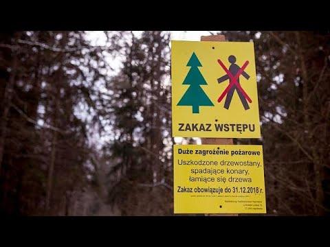 Ευρωπαϊκό Δικαστήριο: Καταδίκη Πολωνίας για το δάσος Μπιαλοβιέσκα …