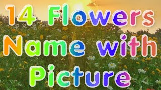 Nonton Different types of flowers with names *kinds* Film Subtitle Indonesia Streaming Movie Download