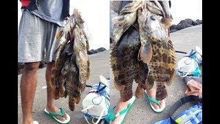 Download Video mancing ikan kerapu di pinggiran pantai semarang MP3 3GP MP4