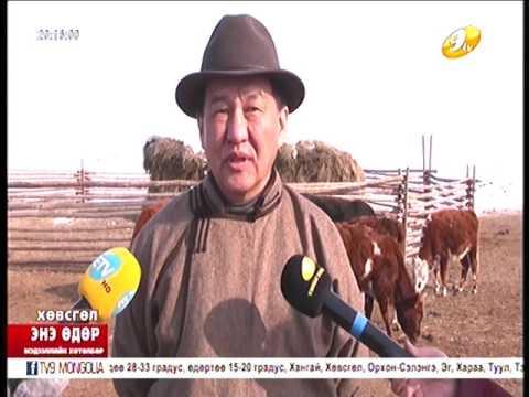 Хөвсгөл аймгаас Монгол Улсын Аварга малчин долоо тодорлоо