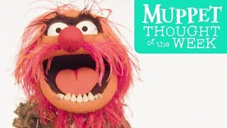Every Monday, The Muppets bring you their wise, uplifting, and downright hilarious Thought of the Week. Today, Animal rocks... and rolls!Subscribe for all new videos from The Muppets! ► http://di.sn/6002BJA1nWatch more of the best moments, music videos, and laughs from The Muppets! ► http://di.sn/6007BJ79RGet more from The Muppets!Disney: http://disney.com/muppetsFacebook: https://www.facebook.com/MuppetsTwitter: https://twitter.com/TheMuppetsInstagram: http://www.instagram.com/themuppetsWelcome to the Official YouTube channel for The Muppets! This channel is home to your beloved group of Muppet friends: Kermit the Frog, Miss Piggy, Fozzie Bear, Gonzo the Great, Animal, Beaker, The Swedish Chef, and more! Subscribe for some of your favorite and best film and television clips from The Muppets, as well as music covers and brand new comedy sketches.Check out exclusive Muppet parodies, Muppet music videos, Muppet song covers, comedy sketches, and more! Join in the fun with original Muppet comedy shows, TV promos, and charity PSAs.