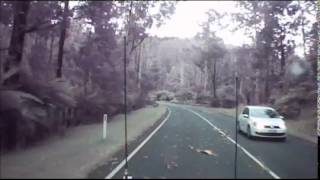 DashCam Captures A Close Call With Falling Trees