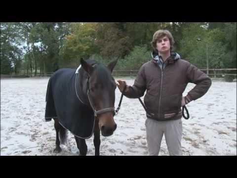 telecharger cheval academie gratuitement pc
