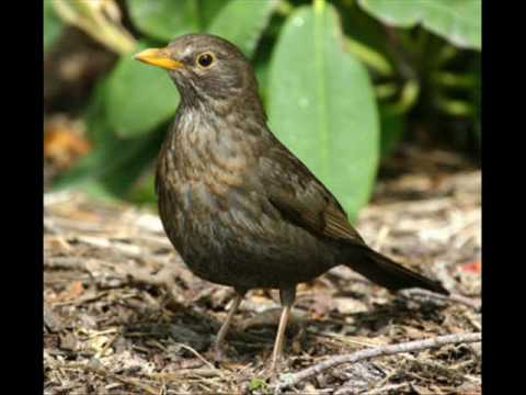 Bye Bye Blackbird (Song) by Joe Cocker