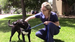 This Dog Is Missing Half Her Face!!! by Vet Ranch
