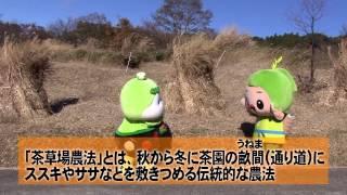 【静岡】かわいすぎる静岡のゆるきゃらたちが世界農業遺産や茶草場を紹介!
