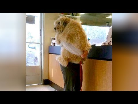 Funny pictures - ANIMALS GO TO THE VET: Funniest REACTIONS - You'll LAUGH ALL DAY LONG