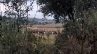 Lannister army preparing for battle in Las Breñas, near Malpartida de Cáceres, for the 4th episode of Season 7 of Game Thrones.