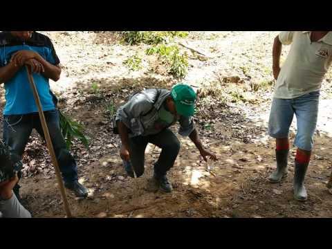 12 - Primeira Aula de Agroecologia na Fazenda Betânia - São Benedito do Sul/PE.