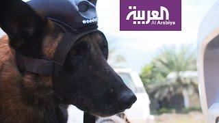 هكذا تستعين شرطة دبي بالكلاب الذكية