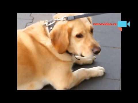 U obchodu pes čekající...