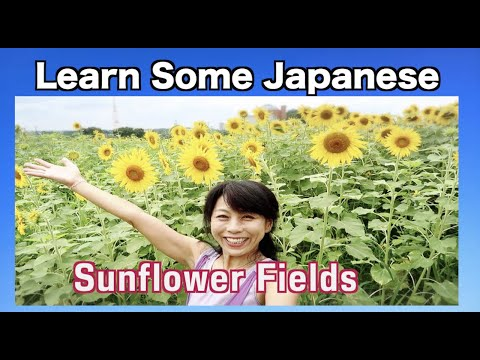 JLesson: Sunflower Fields - A Japanese Lesson -