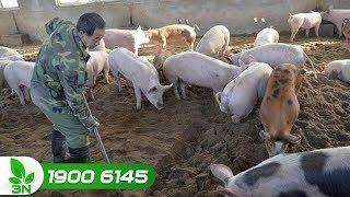 Nông nghiệp | Việt Nam đã có phòng xét nghiệm virus dịch tả lợn châu Phi hay chưa?
