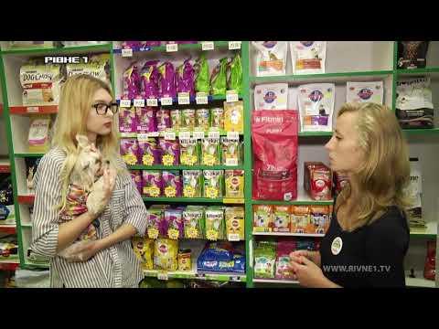 Як правильно годувати собаку? [ВІДЕО]