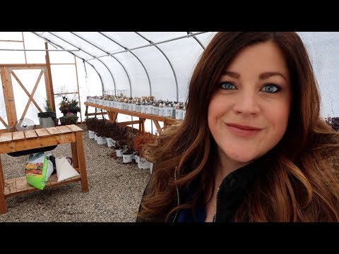 Random Winter Gardening Projects! 🌿💚😃 // Garden Answer