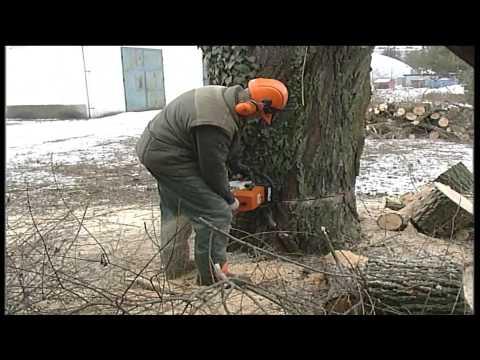 Zrezaním starej vŕby začala príprava na vyrezanie drevenej sochy anjela