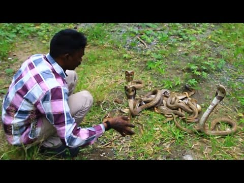 Vava Suresh With 20 Attacking Cobras !! SNAKE MASTER EP 175 05-08-2016
