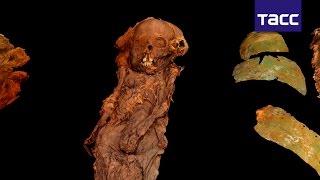 Ученые РФ создали 3D-модель мумии XIII века, обнаруженной на Ямале