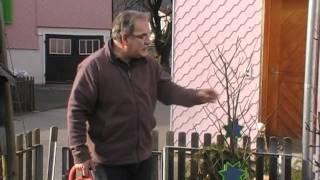 #279 Nachgiessen von Kuebelpflanzen im Winter