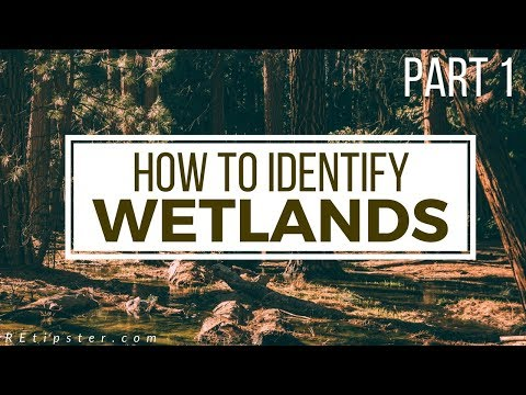 How To Identify (and Avoid) Wetlands - Part 1