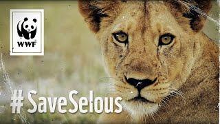 Das einzigartige Weltnaturerbe in Tansania wird bedroht. In nur 4 Jahren wurden 66% der Elefanten in Selous durch Wilderer getötet und mitten im Schutzgebiet...