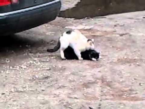 Tak koty robią dzieci xd