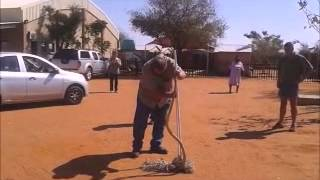 Ellisras South Africa  City pictures : Snouted cobra in Ellisras, South Africa,