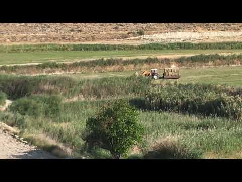 Alfalfa en la Vega Del Río Guardal