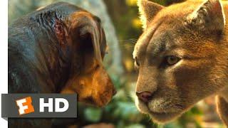 Video A Dog's Way Home (2018) - Big Kitten Returns Scene (7/10) | Movieclips MP3, 3GP, MP4, WEBM, AVI, FLV Mei 2019