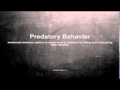 Medical vocabulary: What does Predatory Behavior mean