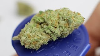 Fire Alien Kush - (Strain Review) by Strain Central