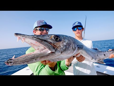 BIGGEST Kingfish I've EVER Seen While Barracuda Fishing!!